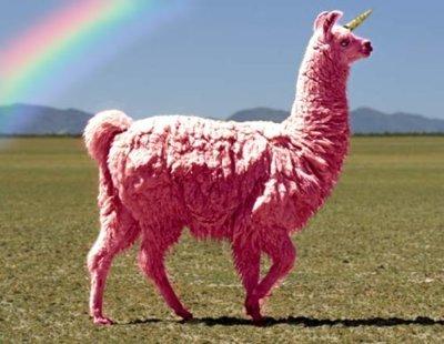 funny-llama-lol-nonsense-pink-favim.com-325386